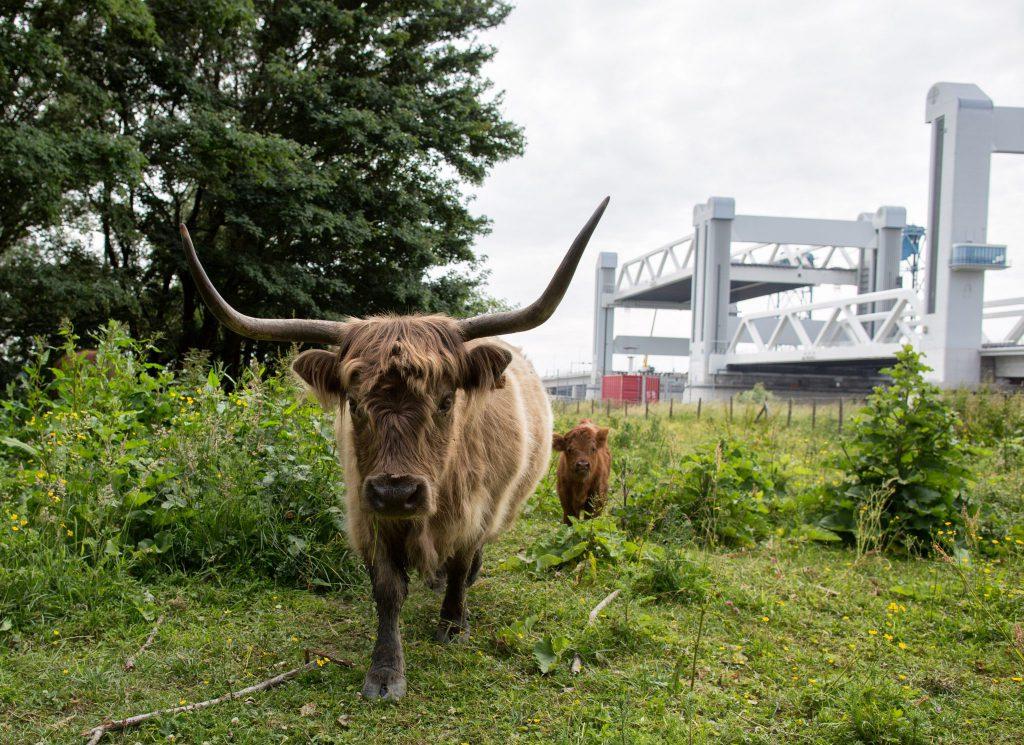 GETIJDENPARK: Nominatie voor programma 'rivier als getijdenpark'
